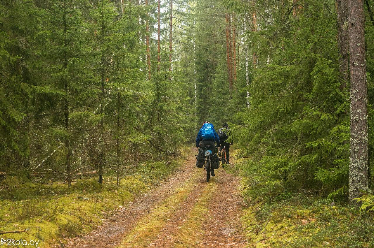 Дорога через лес на наивысшую точку Докшинского района